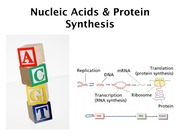12. NucleicAcids & Protein synthesis(1)