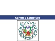 Genome Structure