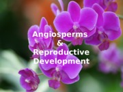Lecture 2 - Angiosperms _26 reproductive development(1)