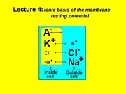 (4) Ionic basis of the membrane resting potential.ppt