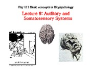 Auditory and Somatosensory Systems (Lecture 9)