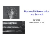 NPB100+09+neuronal+differentiation+and+survival (1)