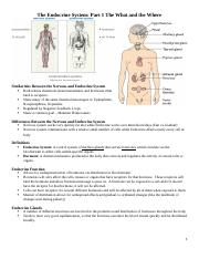 The Endocrine System.docx