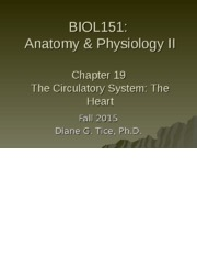 Chapter 19 - The Circulatory System - The Heart