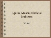 Equine Musculoskeletal Problems
