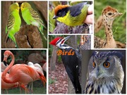 Lecture 27 - Birds and Mammals