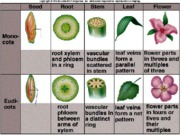 monocots & dicots differinces