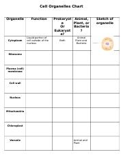 Cell Organelles Chart