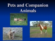 Pets_and_Companion_Animals_F_2011 (1)