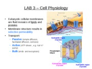 LAB 3 - Cell Physiology