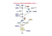 10th lecture _Fiehn BIS103 fatty acid catabolism_winter 2008
