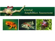 Lecture 4- Amphibian decline and deformities
