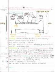 Lec_11 Cardiovascular IV Control Notes