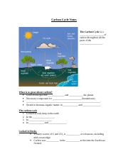 _ 17 Carbon Cycle Notes - Copy.doc