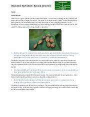 Week1_Natural_Selection_Worksheet (1).docx - Naimah Spann.docx
