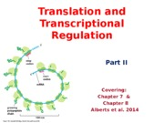 Lecture 6 -Translation and Transcriptional RegulationFF