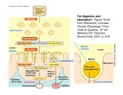 food science and gastroinstestinal physiology - 00137