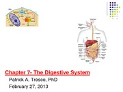 Week 8_The Digestive System _Feb 26_2014