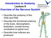 UWS Anatomy Week 10 Lecture Notes - Nervous System