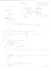 Lecture 19 Workshop Notes 1