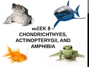 Week 8 PPT (Chondrichthyes, Actinopterygii, and Amphibia)