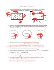 Diffusion Osmosis Worksheet Pdf Diffusion Osmosis Worksheet Biology 160 Alison Davidson Name 1 Use Arrows To Indicate The Direction Of Diffusion In Course Hero