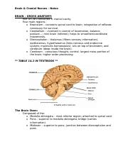 Brain-Cranial-Nerves-Notes.docx