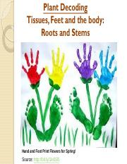 PD 3-Tissues, roots, and stems - Blanked.pdf