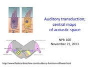 Lecture 17_ Auditory