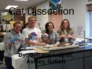 Cat Dissection