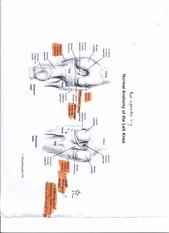 EXSS 147 Left Knee Anatomy Labeled chart IMPORTANT AREAS HIGHLIGHTED