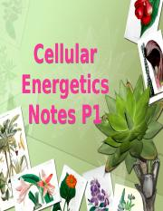 Photosynthesis Notes Part 1