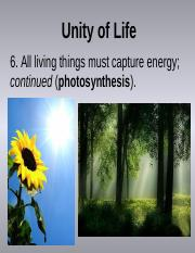 8_photosynthesis (1)