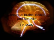 Brains Bodies and Behavior II chapter 3