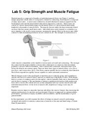 Grip Strength and Muscle Fatigue..pdf