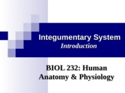gumentary System Integumentary System Introduction Introduction