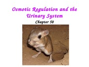 Lecture 32 - Osmoregulation and Excretory system