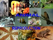 Animal-Reproduction