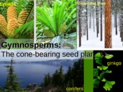 Lab3Gymnosperms-NakedSeedVascularPlantsPowerpointBIO182LAB