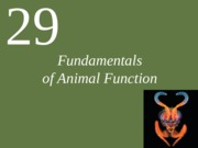 Ch29 Animal Form and Function
