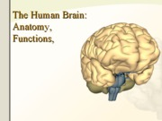 Brain-Anatomy-Research