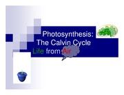 Photosynthesis_calvincycle_ppt