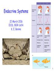 Lecture 16 - Endocrine Systems
