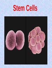 Stem Cells Introduction.ppt