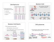 11.DNA_Replication