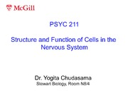 Lecture 2- Structure and Function of Cells In The Nervous System
