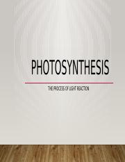 light reactions and photosynthesis