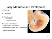 lecture 15 Early Mammalian Development