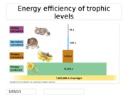 Energy efficiency of trophic levels