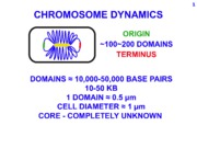 BACTERIAL_CELL_CYCLE_CHROMOSOME_DYNAMICS